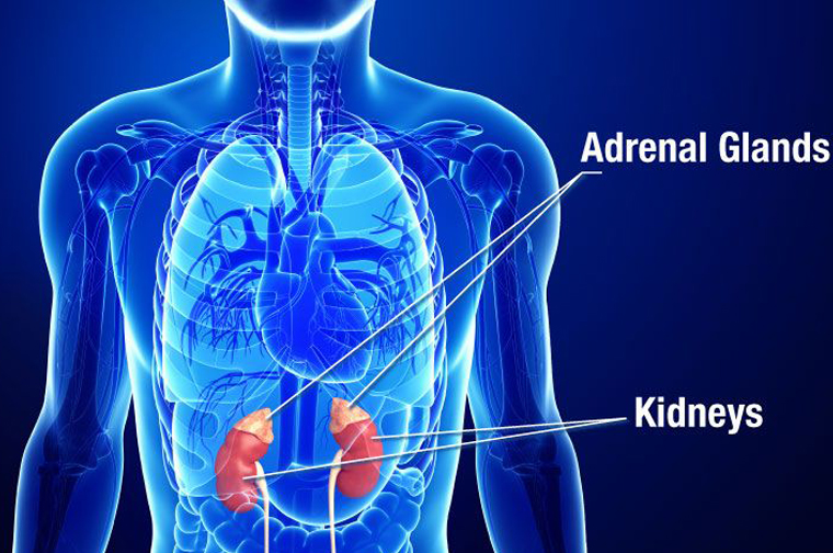 What do you know about adrenal fatigue?