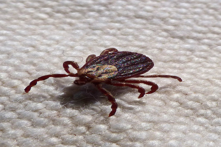 5 Things You Can Do to Keep the Ticks at Bay